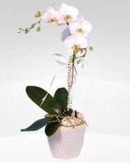 1 dallı orkide saksı çiçeği  Siirt anneler günü çiçek yolla