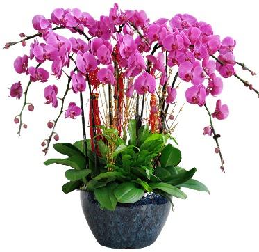 9 dallı mor orkide  Siirt internetten çiçek satışı