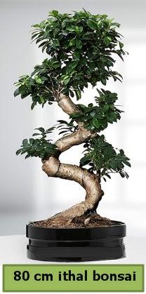 80 cm özel saksıda bonsai bitkisi  Siirt güvenli kaliteli hızlı çiçek