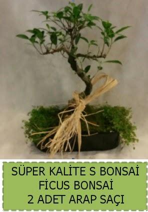 Ficus S Bonsai ve arap saçı  Siirt güvenli kaliteli hızlı çiçek