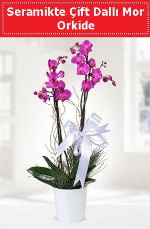 Seramikte Çift Dallı Mor Orkide  Siirt çiçekçiler