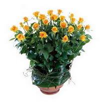 Siirt çiçekçi mağazası  10 adet sari gül tanzim cam yada mika vazoda çiçek