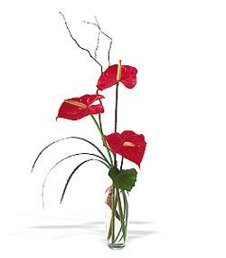 Siirt çiçek yolla  cam yada mika Vazoda 3 adet  antoryum