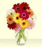 Siirt hediye sevgilime hediye çiçek  cam yada mika vazoda 15 özel gerbera