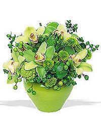 cam yada mika vazoda 5 adet orkide   Siirt anneler günü çiçek yolla