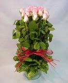 13 adet pembe gül silindirde   Siirt çiçek mağazası , çiçekçi adresleri