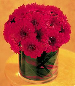 Siirt çiçek yolla , çiçek gönder , çiçekçi   23 adet gerbera çiçegi sade ve sik cam içerisinde
