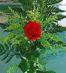1 adet kirmizi gül buketi   Siirt çiçek , çiçekçi , çiçekçilik