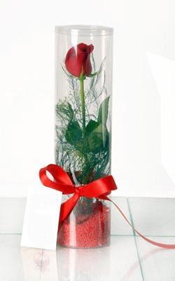Siirt çiçek mağazası , çiçekçi adresleri  Silindir vazoda tek kirmizi gül