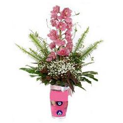 Siirt İnternetten çiçek siparişi  cam yada mika vazo içerisinde tek dal orkide çiçegi