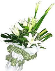Siirt uluslararası çiçek gönderme  3 dal kazablanka çiçegi ve yesillikler