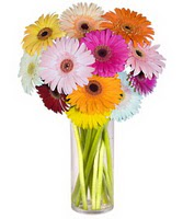 Siirt çiçek satışı  Farkli renklerde 15 adet gerbera çiçegi
