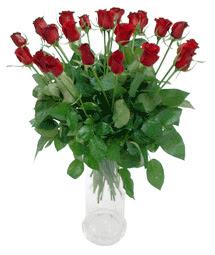 Siirt güvenli kaliteli hızlı çiçek  11 adet kimizi gülün ihtisami cam yada mika vazo modeli