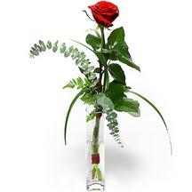 Siirt internetten çiçek satışı  Sana deger veriyorum bir adet gül cam yada mika vazoda