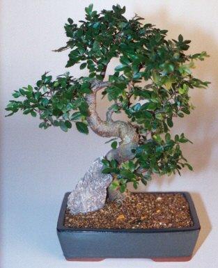 Siirt çiçek servisi , çiçekçi adresleri  ithal bonsai saksi çiçegi  Siirt çiçek yolla