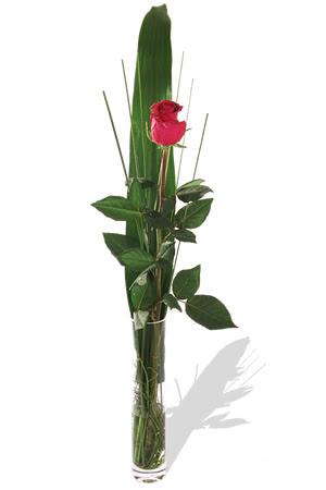 1 adet cam vazo içerisinde kirmizi gül  Siirt online çiçekçi , çiçek siparişi