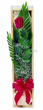 Sade ve gösterisli kutu içerisinde tek gül  Siirt çiçek gönderme sitemiz güvenlidir