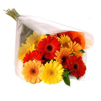 Karisik renklerde gerbera buketi  Siirt çiçekçi mağazası