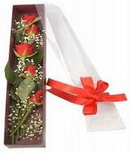 kutu içinde 5 adet kirmizi gül  Siirt çiçek satışı