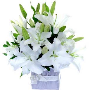 Siirt çiçek mağazası , çiçekçi adresleri  2 dal cazablanca vazo çiçeği