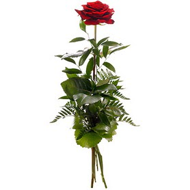 Siirt anneler günü çiçek yolla  1 adet kırmızı gülden buket