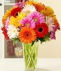 Siirt online çiçek gönderme sipariş  15 adet gerbera çiçek vazosu