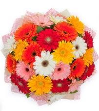 15 adet renkli gerbera buketi  Siirt 14 şubat sevgililer günü çiçek