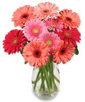vazo içerisinde 13 adet gerbera çiçeği  Siirt çiçek yolla