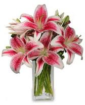 Vazo içerisinde 5 dal kazablanka çiçeği  Siirt çiçekçi mağazası