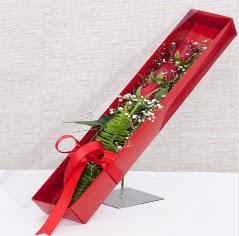 Kutu içerisinde 3 adet kırmızı gül  Siirt ucuz çiçek gönder