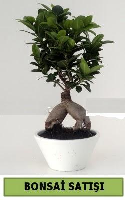 Bonsai japon ağacı satışı  Siirt online çiçek gönderme sipariş