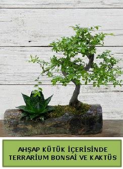 Ahşap kütük bonsai kaktüs teraryum  Siirt çiçek satışı