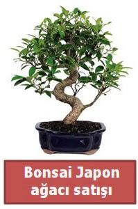 Japon ağacı bonsai satışı  Siirt çiçek yolla