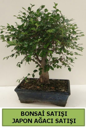 Minyatür bonsai japon ağacı satışı  Siirt çiçek servisi , çiçekçi adresleri