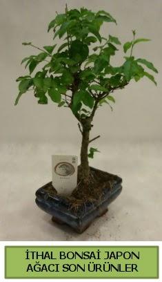 İthal bonsai japon ağacı bitkisi  Siirt internetten çiçek siparişi