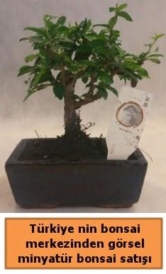 Japon ağacı bonsai satışı ithal görsel  Siirt çiçek mağazası , çiçekçi adresleri