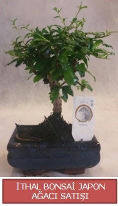 İthal küçük boy minyatür bonsai ağaç bitkisi  Siirt güvenli kaliteli hızlı çiçek
