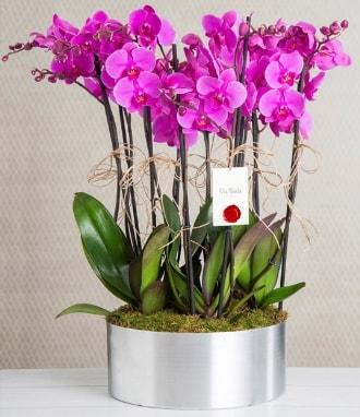 11 dallı mor orkide metal vazoda  Siirt çiçek servisi , çiçekçi adresleri