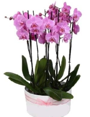 Beyaz seramik içerisinde 7 dallı mor orkide  Siirt güvenli kaliteli hızlı çiçek
