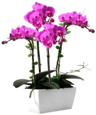 Seramik vazo içerisinde 4 dallı mor orkide  Siirt yurtiçi ve yurtdışı çiçek siparişi