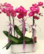Beyaz seramik içerisinde 4 dallı orkide  Siirt çiçek yolla , çiçek gönder , çiçekçi