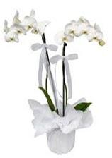 2 dallı beyaz orkide  Siirt uluslararası çiçek gönderme