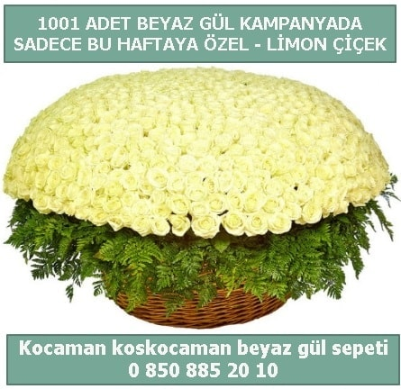 1001 adet beyaz gül sepeti özel kampanyada  Siirt çiçek servisi , çiçekçi adresleri