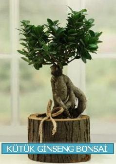 Kütük ağaç içerisinde ginseng bonsai  Siirt çiçek servisi , çiçekçi adresleri