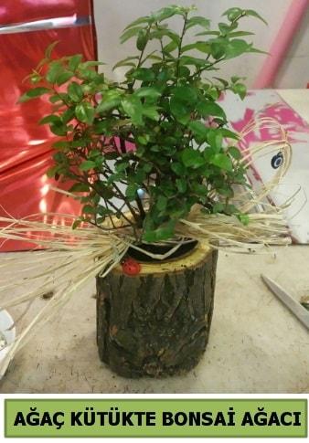 Doğal ağaç kütük içerisinde bonsai ağacı  Siirt çiçek servisi , çiçekçi adresleri