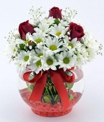 Fanusta 3 Gül ve Papatya  Siirt çiçek gönderme