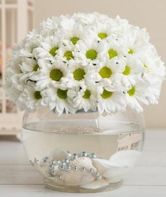 Fanusta beyaz Papatya  Siirt yurtiçi ve yurtdışı çiçek siparişi